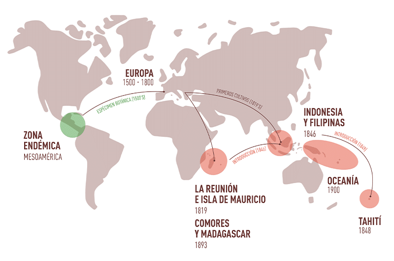 Introducción de la vainilla en el mundo