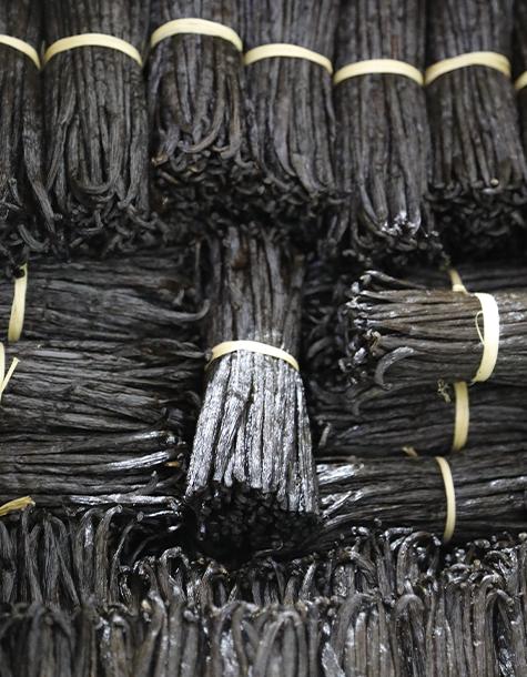 vanille noire qualite gourle